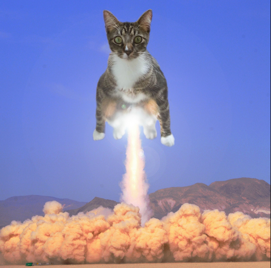 cat-rocket-launch